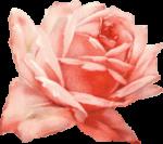 Flower 1 Reversed