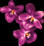 Flower 4 Reversed