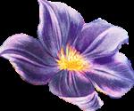 Flower 3 Reversed