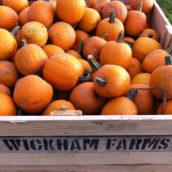 Wickham Farms Fall Fun